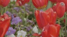 Çiçeklerdeki Farklı Renkler- A9 Tv