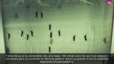 10 Adımda Zika Virüsü