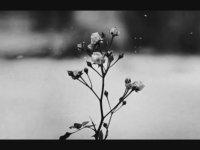 Chopin - Spring Waltz
