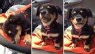 Öfke Nöbeti Geçiren Aşırı Minnoş Köpek