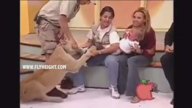 Canlı Yayında Küçük Kıza Saldıran Aslan