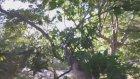 GoPro İle Çekim Yapan Sincap