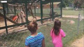 Çocukları Boka Bulayan Psikopat Maymun
