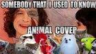 Efsane Şarkı Somebody That I Used To Know'u Hayvanlar Söylerse
