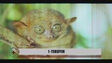 Dünyanın En İlginç ve Fazla Bilinmeyen 7 Hayvanı