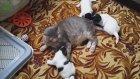 İlk Kez Köpek Yavrusu Gören Kediler