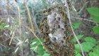 Sarıcı Arılara Yaklaşma Tekniği