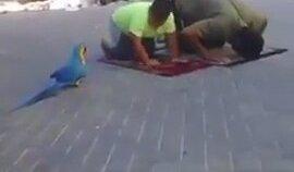 Çocuğa Namaz Kıldırmayan Papağan