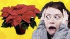 Uzak Durmanız Gereken 10 Çok Zehirli Bitki | Yap Yap