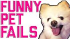 Funny Animal Fails | 2016 Animal Compilation from FailArmy