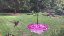 Sinek Kuşu'nun Slow Motion Görüntüsü