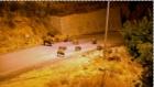 Tunceli'de Aç Kalan Yaban Domuzları Şehre İndi