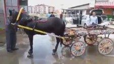 At Arabasıyla Oto Yıkamacıya Gelip Atını Yıkatan Dayı