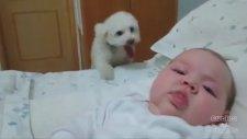 Bebekle Bebek Olan Dünyanın En Şirin Köpeği