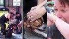 Hem Av Köpeğini Hem de Sahibini Acımasızca Yaralayan Pitbull