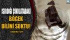 Isırdığı Çikolatadaki Böcek Dilini Soktu! : Dünyanın Enleri ?