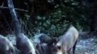 Domuzları Kedi Ve Köpek Mamasıyla Besleyen Gençler
