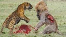 Wild Animal Attack Baboon. Elephant Vs Crocodile Attacks Hyena Mountain Lion Vs Anaconda Hunting
