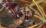 Ecnebi Böcek Reis