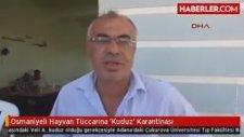 Osmaniyeli Hayvan Tüccarına 'Kuduz' Karantinası