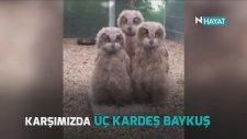 3 Kardeş Baykuştan Kafa Şov