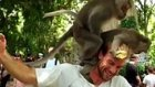 Turistin Kafasında Seks Yapan Maymunlar