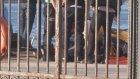Köprüden Atlayarak İntihar Etmek İsteyen Şahsı Deniz Polisi Kurtardı