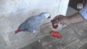 İsot İle Beslenen Urfalı Papağan