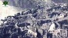 Sivri Ada (Hayırsız Ada) 3 Haziran 1910 Köpek Katliamı Belgeseli