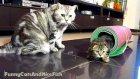 The Mega Tricks team : Kittens  Neo, Neko and Cat Tyson   Funny Cats