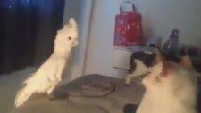 Kakadu Kedileri Taklit Etti Kediler Ne Yapacağını Şaşırdı