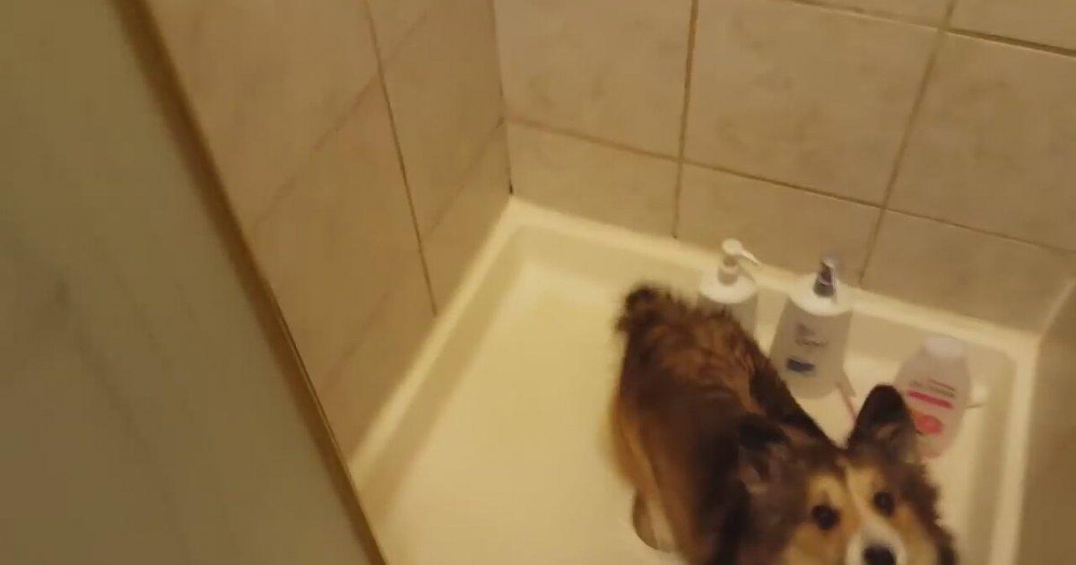 Duş Yapacağını Duyunca Sevinç Patlaması Yaşayan Köpek