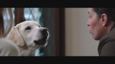 Who Gets The Dog? (2016) Fragman