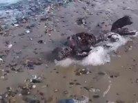 Denizkızını Andıran Garip Yaratık