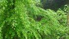 Ordu Doğa İlkbahar Yağmur Yeşillik Ve Huzur 2015