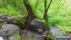 Dere Kenarında Yemyeşil Doğa Kuş Sesleri Ve Köy Hayatı