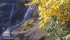 Ordu Doğa Sarısay Şelalesi Ve Sarı Yapraklar 2015