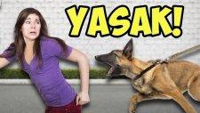 Bakılması Yasak Olan 12 Tehlikeli Köpek Irkı- Oha Diyorum