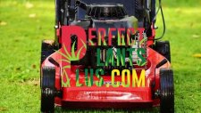 Green Savings For Green Thumb Gardeners Plus All - Perfectplantsplus.com