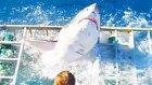 Köpekbalığı Saldırısından Mucizevi Şekilde Kurtulan Dalgıç