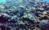25 Milyon Yıllık Büyük Set Resifi'nin Ölmesi
