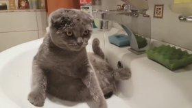 Musluğun Altında Yıkanmaya Bayılan Kedi
