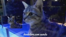 Pencerede Bir Kedi