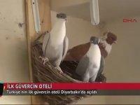 Türkiye'nin İlk Güvercin Oteli