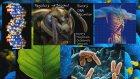 Biyolojiye Genel Bakış  - Khanacademyturkce