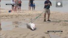 Sahile vuran köpekbalığı kurtarıldı