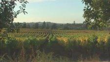 California Winery Vineyards with Ashley Gershoony