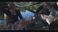 Dünyanın en büyük kedisi - Liger