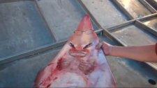 İnsan Yüzlü Balık