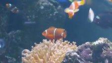 Long Beach Aquarium Experience Ashley Gershoony